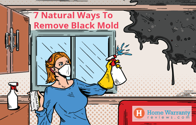 7 Natural Ways To Remove Black Mold