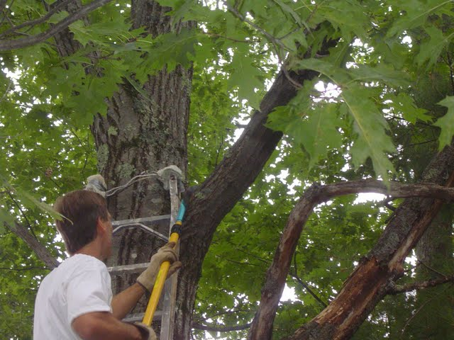 Cutting Tree Limbs