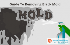 Guide To Removing Black Mold