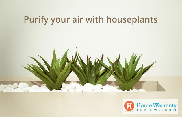 Purify your air with houseplants